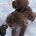 Snow Monkeys, parenting