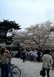 medium_shinjuku_garden_gate.jpg