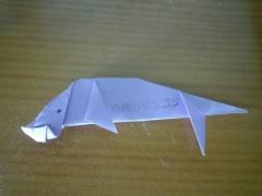 okinawa, military, dugong